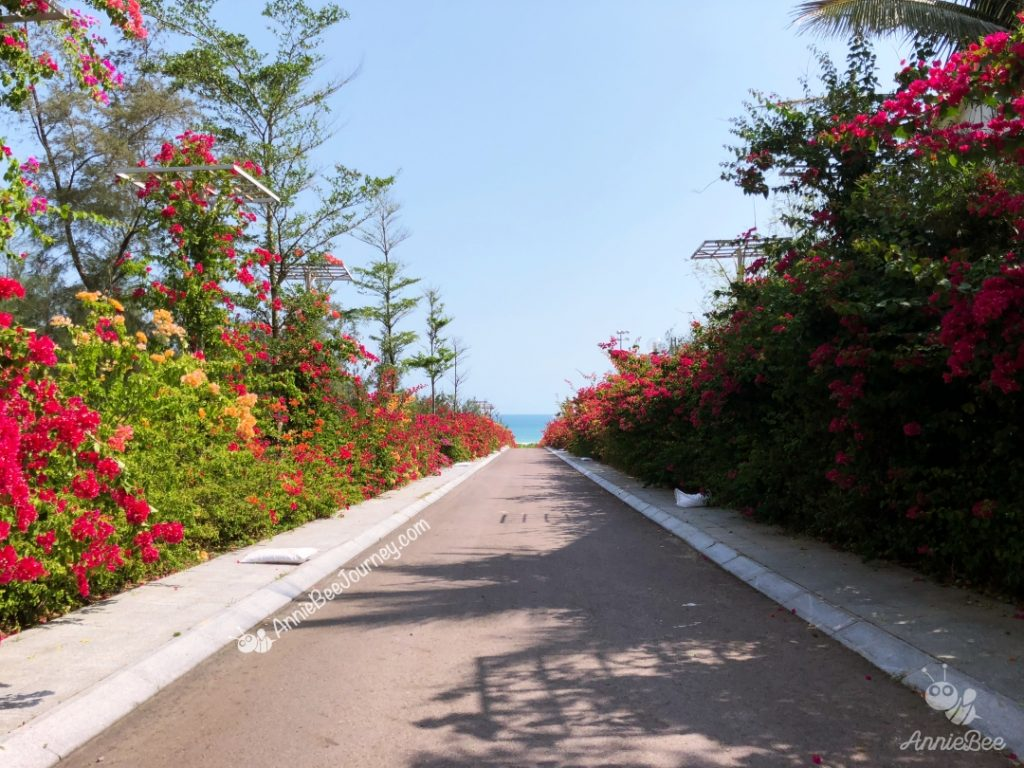 A road with full of bougainvillea at FLC resort in Quy Nhon, Vietnam