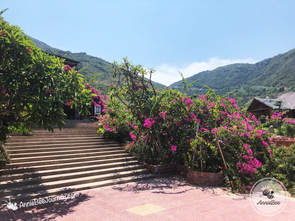 Flowers at Ky Co island in Quy Nhon, Vietnam