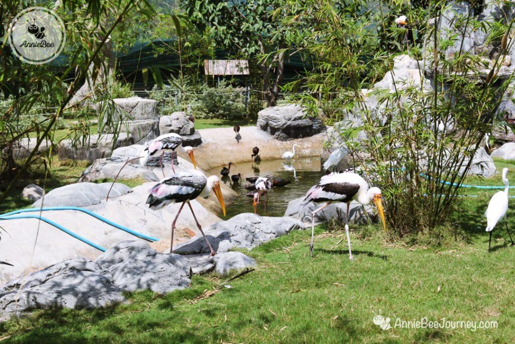 Bird park at FLC Zoo Safari in Quy Nhon, Vietnam