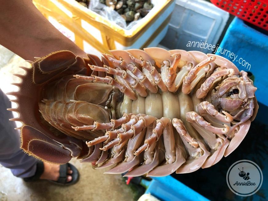 Giant Isopod in Quy Nhon, Vietnam
