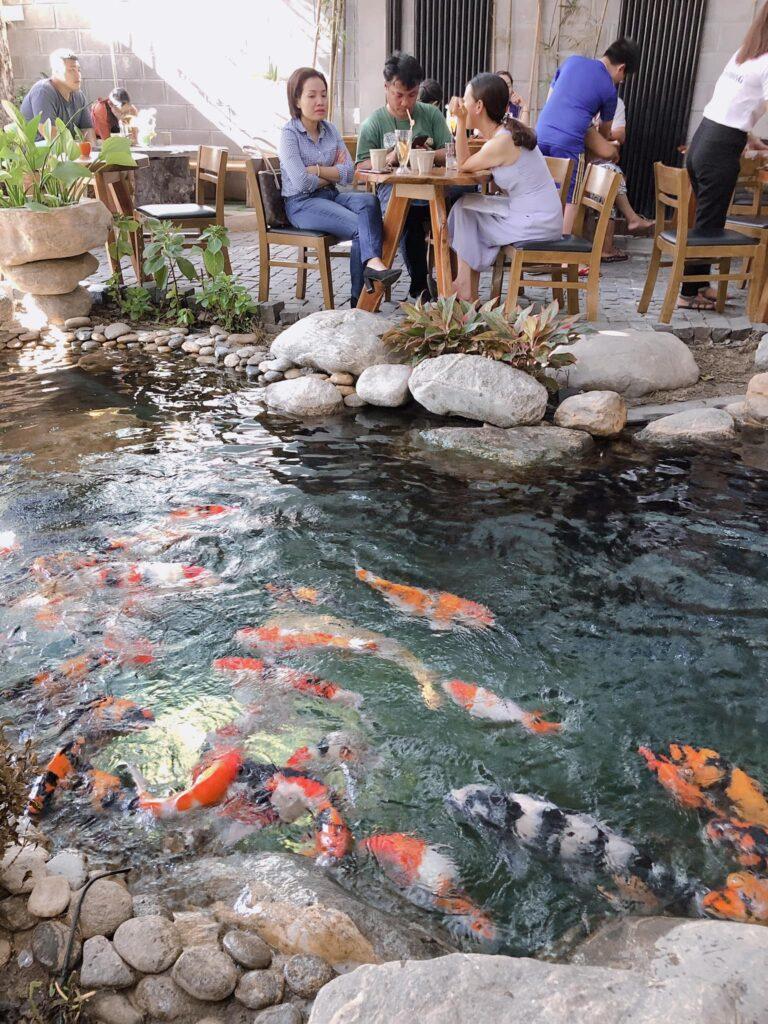 Koi fish pond at Green Cafe in Quy Nhon, Vietnam